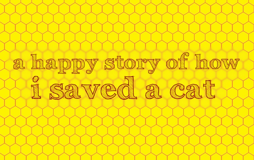 A Happy Story of How I Saved a Cat